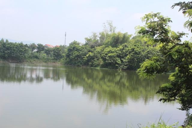 Xung quanh hồ đều trông sưa
