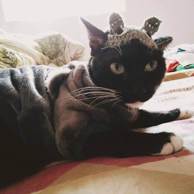Mèo được cô chủ chăm sóc cẩn thận với trang phục mùa đông