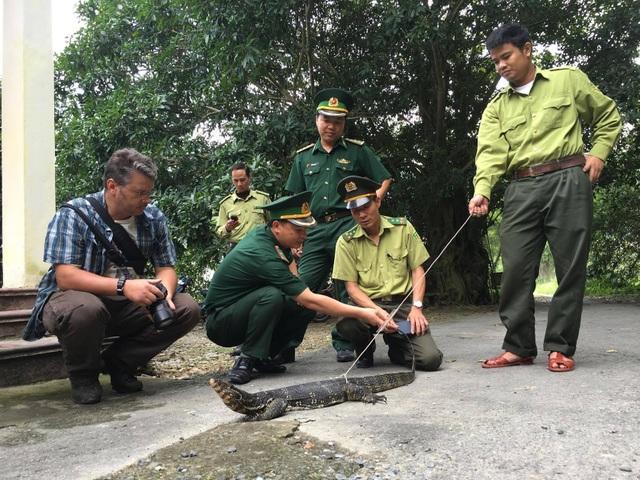 Con kỳ đà hơn 5 kg được bàn giao cho Vườn quốc gia Cát Bà để thả về môi trường hoang dã