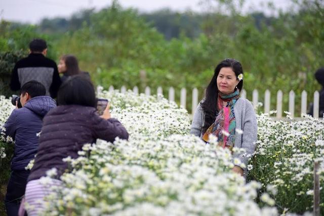 Không chỉ có các bạn trẻ, nhiều người trung niên cũng tìm đến vườn chụp ảnh với cúc họa mi.