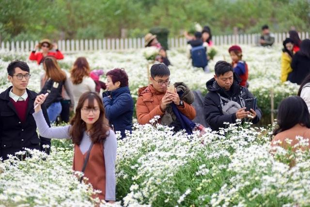 """Tại Nhật Tân, người dân quây rào thành các vườn hoa nhỏ và bán vé vào cửa chụp ảnh với giá 50.000 đồng/ lượt. Anh Thắng, chủ một vườn cúc họa mi ở đây cho biết, vào mùa, mỗi ngày vườn hoa của anh đón hàng trăm lượt khách, ngày cuối tuần cao điểm có thể lên tới cả nghìn lượt. """"Mùa cúc họa mi chúng tôi đón khách đến vườn đông nhất trong năm. Năm nay cúc họa mi được mùa, hoa nở đẹp, khách đến cũng đông gấp 2 – 3 lần so với mọi năm"""", anh Thắng nói."""