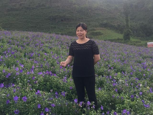 Bà Nguyễn Thị Kim Huê - Giám đốc Trung tâm dịch vụ Nông nghiệp huyện Bắc Hà - Lào Cai