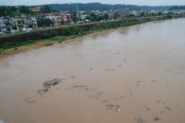 Rác củi trôi lềnh bềnh trên mặt sông báo hiệu lũ sông Hồng còn dâng cao hơn