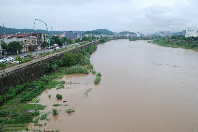 Nhiều diện tích rau màu trồng ven sông Hồng ở thành phố Lào Cai bị ngập trắng