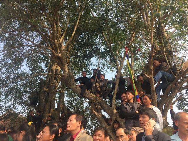 Hội thi chọi dê thu hút nhiều người xem, nhiều người trèo lên cây để xem.
