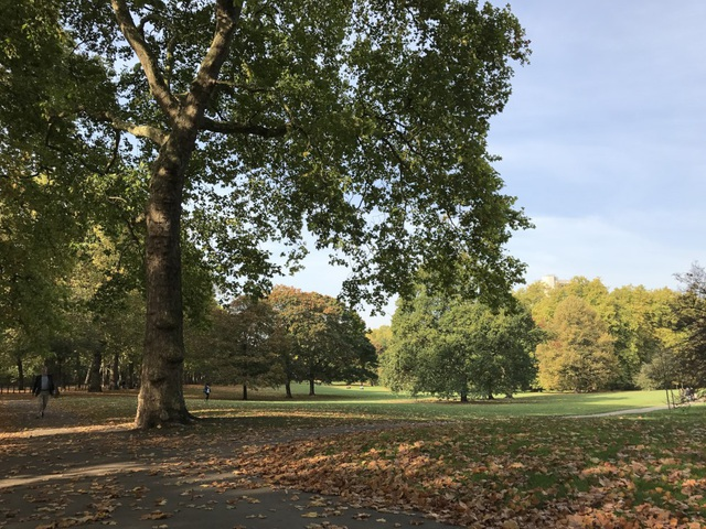 Lá cây ngả vàng trong không khí lạnh hanh hao cuối mùa thu ở công viên Green Park nằm kế bên Cung điện Burkingham ở thủ đô London của nước Anh