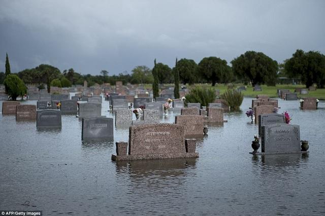 Một nghĩa trang ở Pearland, Texas bị ngập sâu (Ảnh: AFP/Getty)