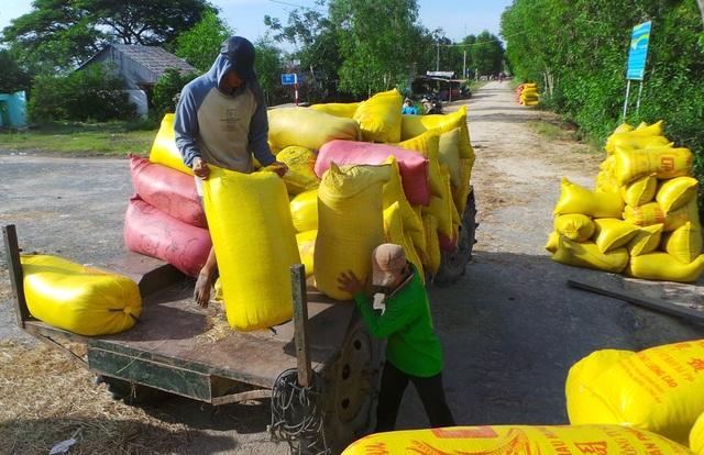 Ở ĐBSCL, mỗi hộ canh tác 3 vụ lúa được lợi nhuận 35 - 40 triệu đồng/ha/năm, thấp hơn 2,7 lần so với Thái Lan; 1,5 lần so với Indonesia và Philippines.