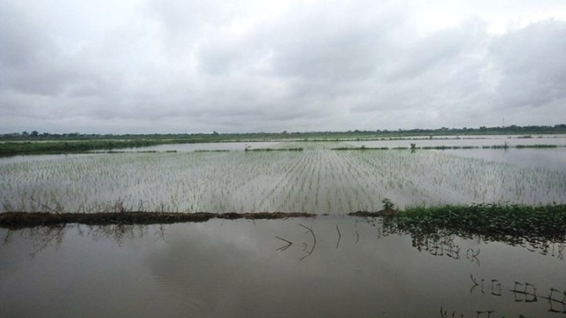Lượng nước ở đồng và kênh tưới tiêu ngang bằng nhau