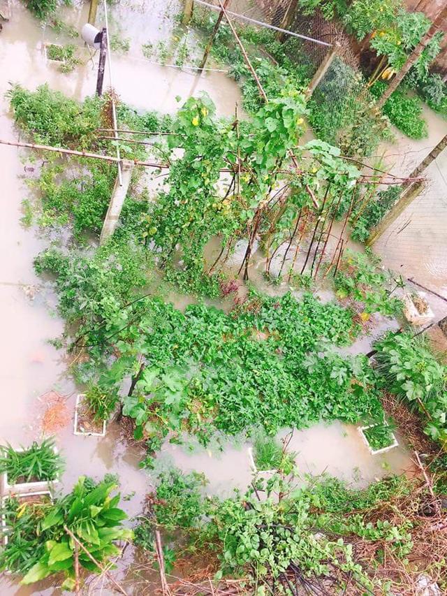 Vườn rau người dân hư hại vì nước lũ (ảnh: Q.Minh)