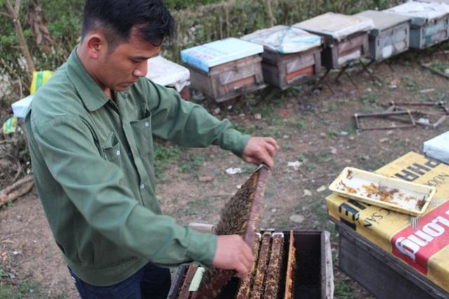 """Nhiều người nghĩ nuôi ong không tốn kém vì chúng có thể tự thụ phấn. Nhưng có làm mới biết cái vất của người nuôi ong. Đây là thời điểm """"dưỡng"""", lấy đủ quân (ong) để đi lấy mật nên người nuôi ong phải thúc cho ong ăn bằng cách mua đường, mua phấn."""