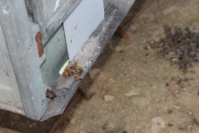 Mỗi thùng có một lỗ nhỏ, chỉ vừa đủ để ong chui ra, chui vào.