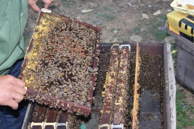 Một thùng ong vào mùa thu hoạch có khoảng 9 cầu quay. Tính ra, người nuôi thu được khoảng 8-9kg mật cho mỗi thùng.