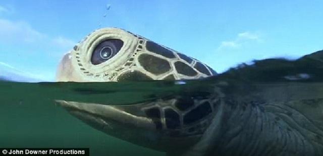 Rô-bốt cá heo, mực và rùa tiết lộ sự sống bí mật của các sinh vật biển - 1