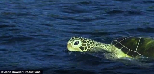 Máy quay Rùa được dùng để theo dõi một đàn cá heo mũi chai