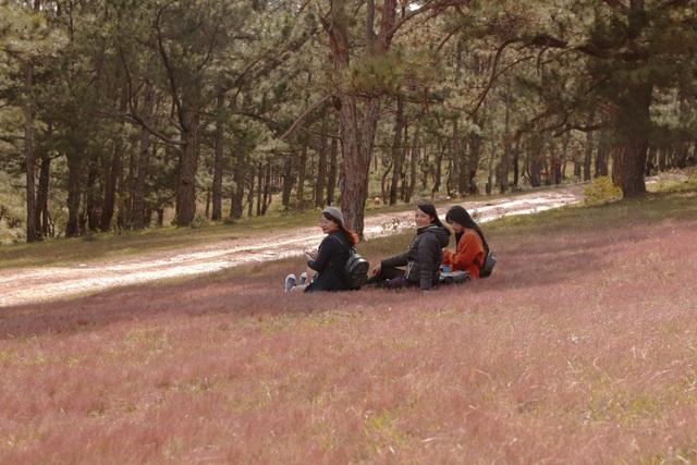 Những cô gái đang nghỉ ngơi dưới tán thông sau một buổi tham quan