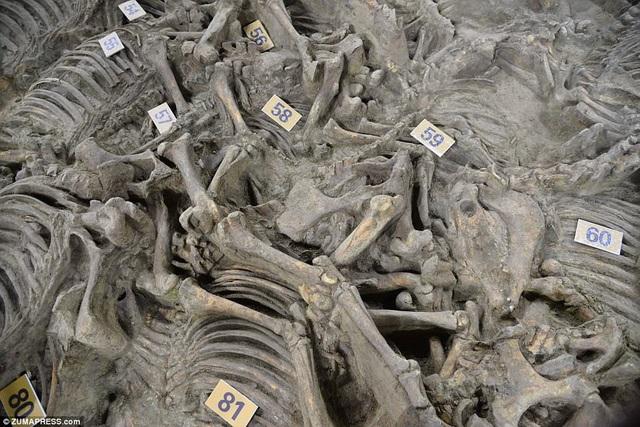 Bí mật ngôi mộ 2400 năm tuổi chứa cả trăm xác ngựa - 5