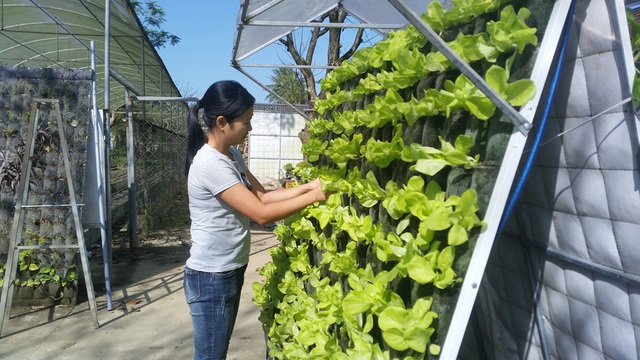 Các thành viên trong nhóm nghiên cứu đang chăm sóc cây trên hệ thống vườn treo