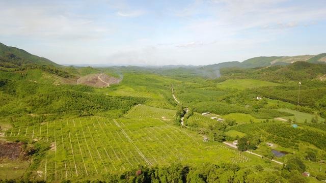 Trang trại gấc của TH tại Yên Thành (Nghệ An) trải dài ngút mắt dưới ánh mặt trời