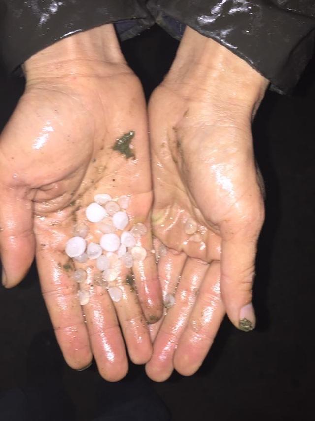 Hạt mưa đá to hơn hạt ngô, rơi trong khoảng 20 phút.