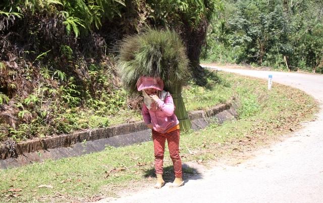 Sau 7 giờ lặn lội trong rừng, chị Hồ Thị Nan bứt được 20 kg đót.