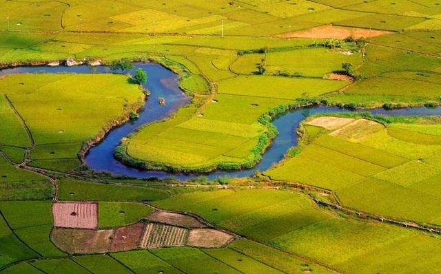 Dòng sông như dải lụa mềm cắt ngang những cánh đồng lúa chín. (Ảnh: Hoa Le)