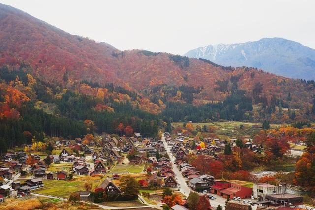Ngôi làng cổ Shirakawago nằm dưới chân núi Hakusan, tỉnh Gifu, miền Trung Nhật Bản đẹp như cổ tích trong mùa thu. Từng mái nhà, khe nước, khoảnh sân trước vườn đều an nhiên, tự tại cả trăm năm qua như một thế giới riêng. Từ trên cao nhìn xuống, ngôi làng như là một Shangrila có thật với những mái nhà hình bàn tay đang cầu nguyện được ôm trọn bởi cánh rừng khoe sắc.