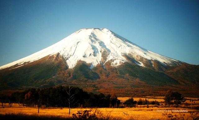 Núi Phú Sĩ, biểu tượng thiêng liêng của nước Nhật khoác lên mình vẻ đẹp lãng mạn khi thu về bởi rừng phong nhuộm vàng ôm trọn thân núi. Sắc vàng càng làm tôn lên vẻ đẹp huyền ảo của đỉnh núi được phủ tuyết trắng quanh năm.