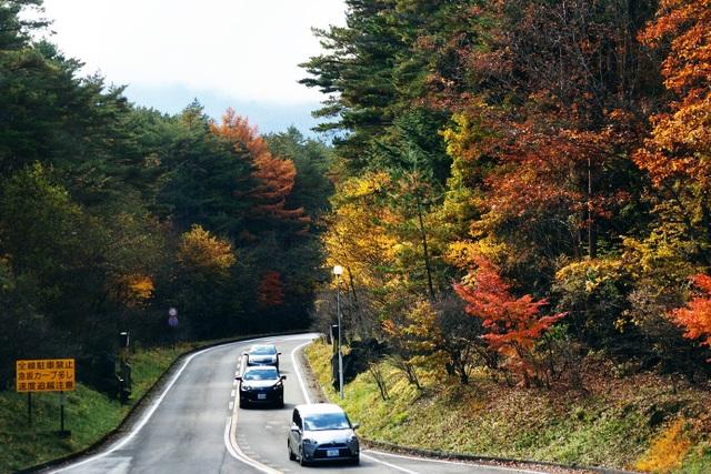 Được thả mình trên cung đường lên núi Phú Sĩ vào mùa thu, du khách sẽ được chiêm ngưỡng sự chuyển mình kỳ diệu của thiên nhiên mùa thu Nhật bản từ những tán lá xanh chuyển sang màu vàng, rồi thắm sắc đỏ.