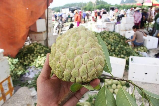 Một quả na trong sạp na anh Hùng ở khu chợ na Đồng Bành có cân nặng lên tới gần 1kg