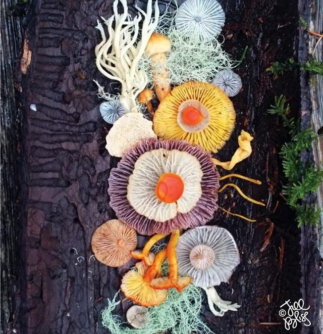 Đây phải chăng là loài nấm đẹp nhất trên Trái Đất? - 11