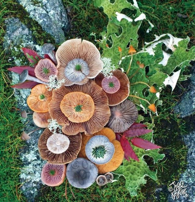 Đây phải chăng là loài nấm đẹp nhất trên Trái Đất? - 12