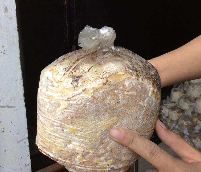 Rau sạch vườn nhà: Cẩm nang trồng nấm tại gia - 3
