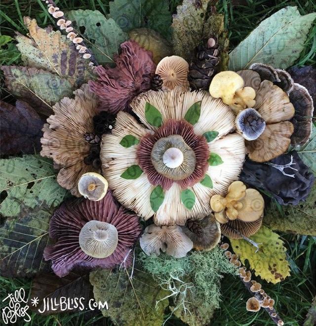 Những hình ảnh đẹp loài nấm ngỡ như bước ra từ những câu chuyện cổ tích.
