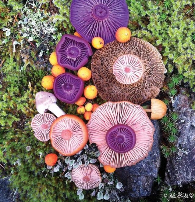 Đây phải chăng là loài nấm đẹp nhất trên Trái Đất? - 5