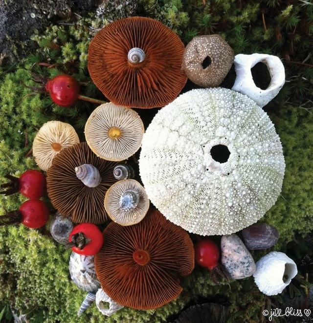 Đây phải chăng là loài nấm đẹp nhất trên Trái Đất? - 6