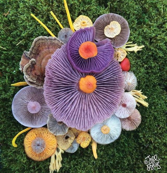 Đây phải chăng là loài nấm đẹp nhất trên Trái Đất? - 9