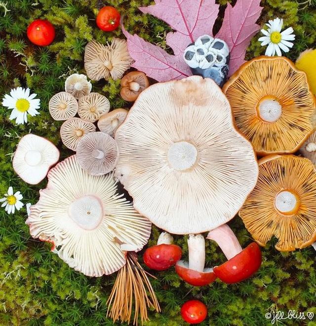 Đây phải chăng là loài nấm đẹp nhất trên Trái Đất? - 10