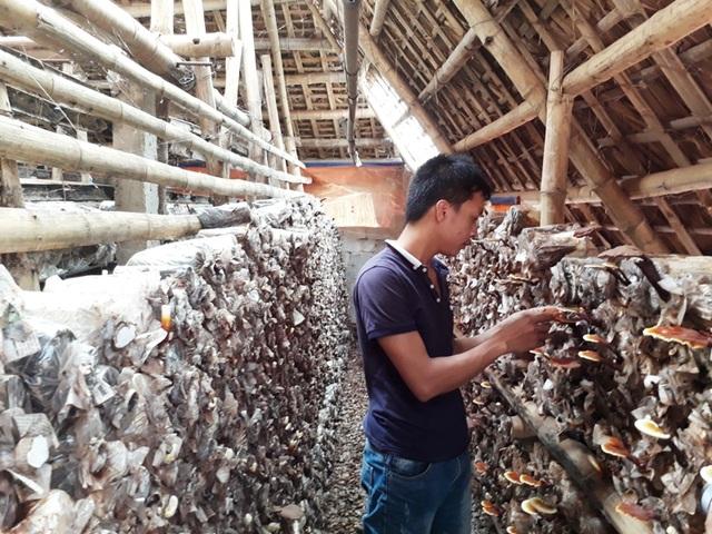 Anh Nguyên đang chăm sóc những phôi nấm tại trang trại