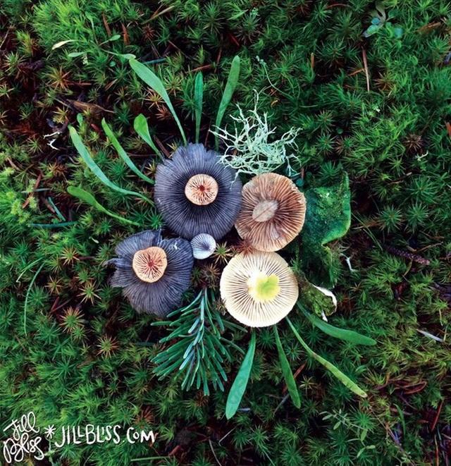 Đây phải chăng là loài nấm đẹp nhất trên Trái Đất? - 13
