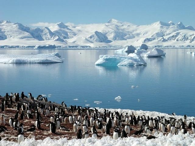 Những sự thật thú vị về Nam Cực - Châu lục lạnh giá nhất hành tinh - 5