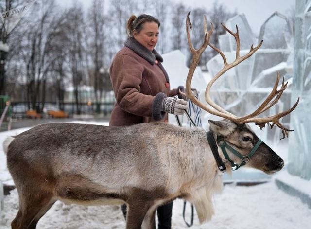 Con tuần lộc tham gia lễ hội Nữ hoàng Tuyết tại trung tâm thủ đô Moscow năm 2014.
