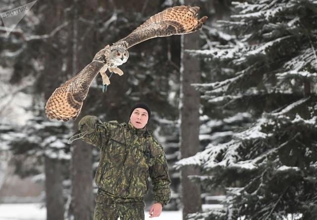 Vì thế, chim ưng được quân nhân Nga huấn luyện bài bản và chặt chẽ để đuổi quạ ra khỏi khu vực dinh Tổng thống.