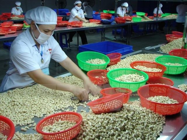 Ngành điều Việt Nam: Kỷ lục 11 năm đứng đầu thế giới và thách thức tiếp theo - 1