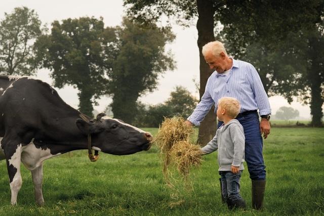 Ngành nông nghiệp chăn nuôi bò sữa đáng ngưỡng mộ của Hà Lan sản xuất 1,3 triệu tấn sữa hằng năm