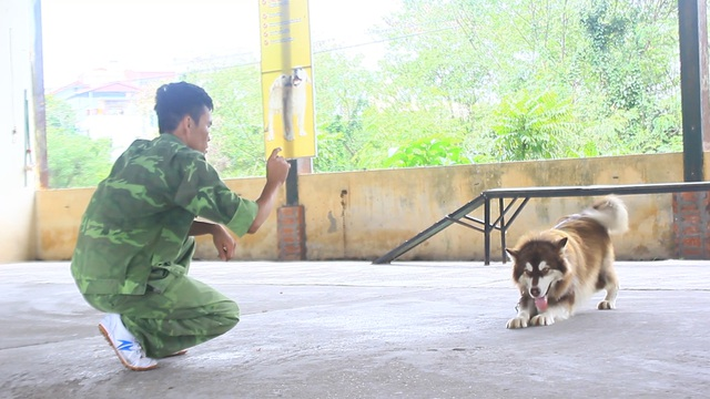 Học ngoại ngữ cũng là một trong những bài học mà các chú chó sẽ được trải qua nếu chủ nhân yêu cầu