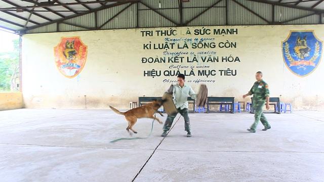 Những chú chó sẽ được học theo một giáo trình đặc biệt