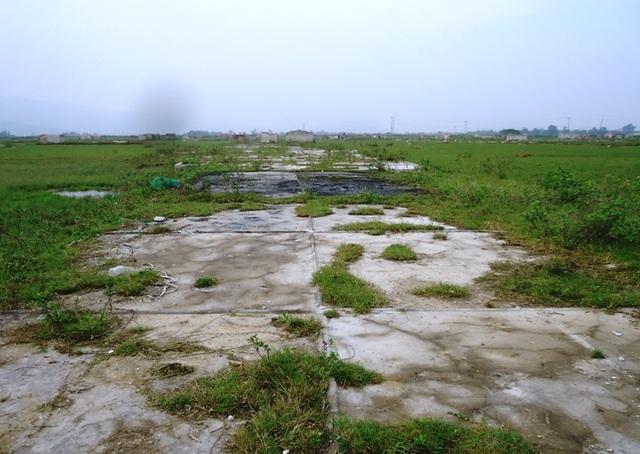 Những cánh đồng muối giờ chỉ để chăn thả trâu bò, thả vịt, ở xã Hải Bình, huyện Tĩnh Gia