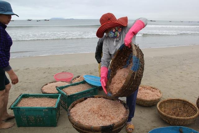 Ngư dân Đà Nẵng phấn khởi vì được mùa ruốc