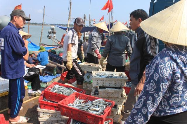 Những ngày này, ngư dân Sầm Sơn, Thanh Hóa vẫn ra khơi đánh bắt thủy sản